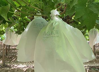 How to keep grapes from Birds and Insects?