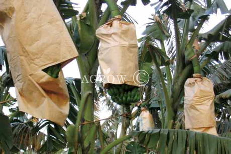 Banana Growing Bags