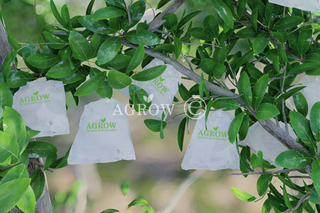 Citrus Growing Bags