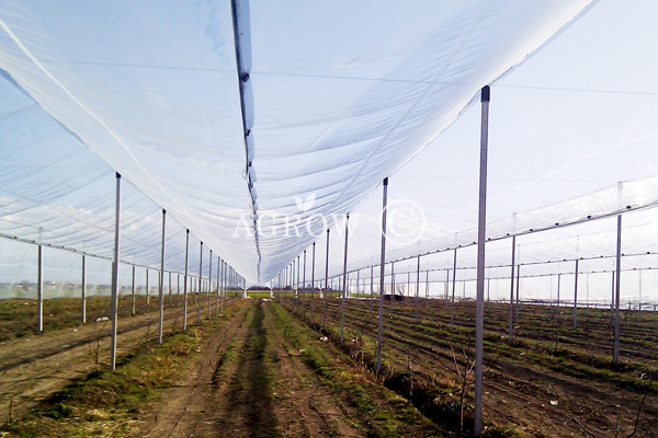 Quality Anti Hail Net Manufacturer and Supplier from China